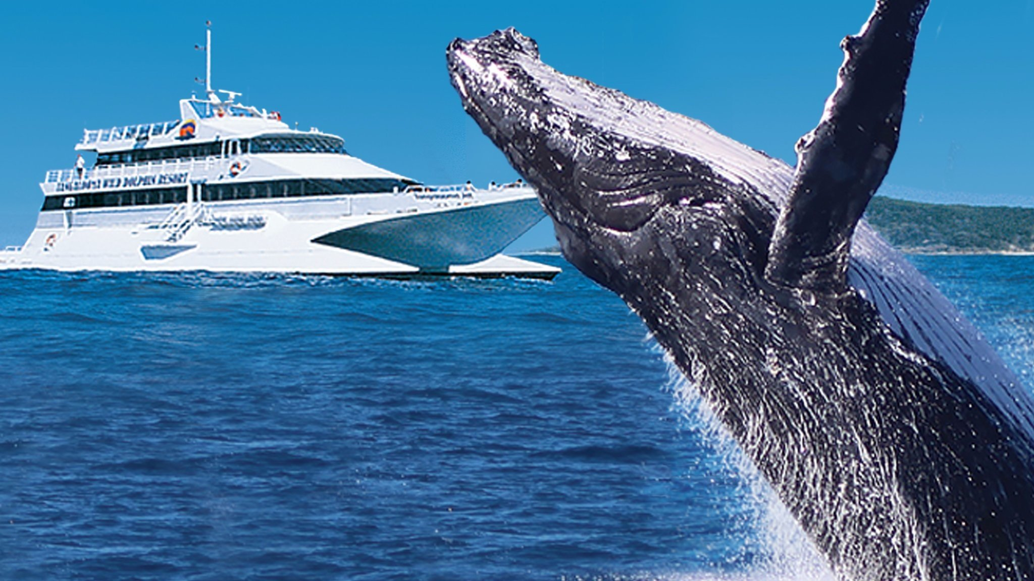Tangalooma Whale Watch Cruises - Visit Brisbane