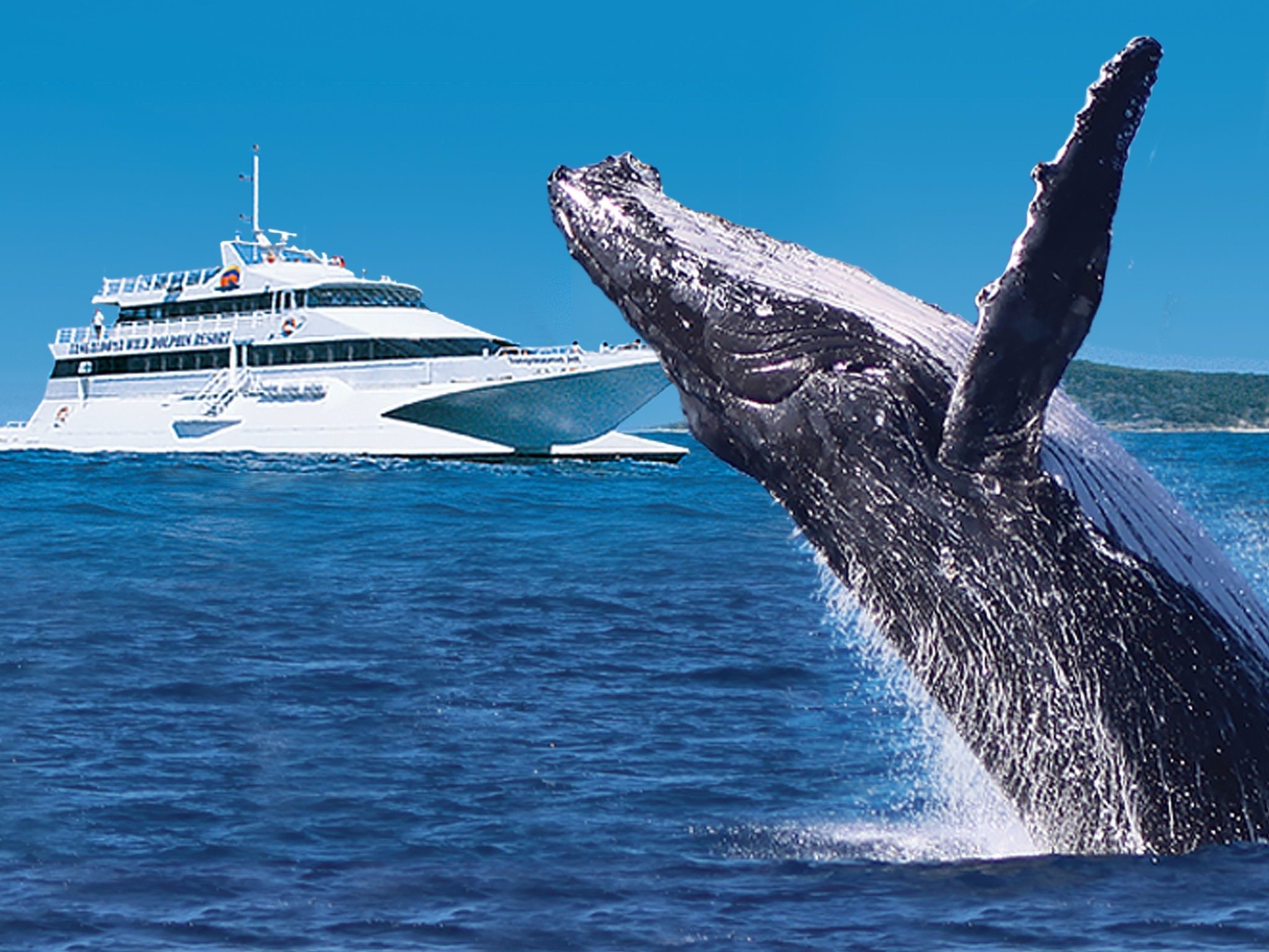 Tangalooma Whale Watch Cruises